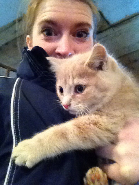 Possibly half my time at HC is spent chasing the kittens….